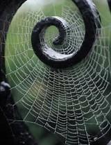 9D Web